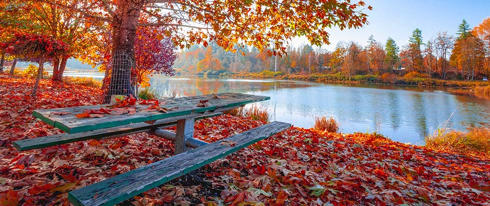 Wooden table surrounded by fallen leaves and a lake